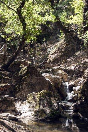 Photo pour Petite cascade dans la forêt - image libre de droit