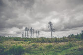 Pine tree silhouettes on a green prairie landscape
