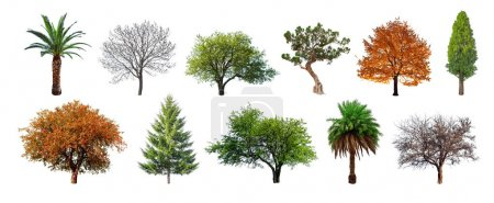 Photo for Set of green trees isolated on white background. Different kinds of tree collection - Royalty Free Image