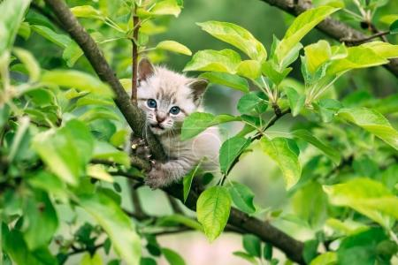 Small kitten with blue ayes on tree