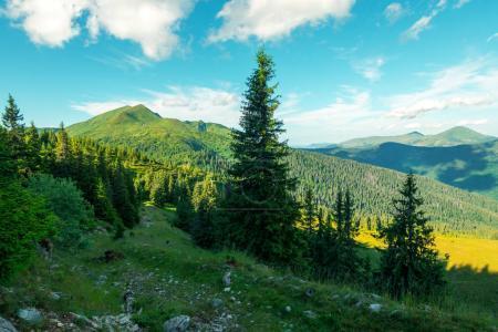 Photo pour Paysage d'été pittoresque en journée ensoleillée dans les Carpates. Forêt luxuriante de verte de pin sur arrière-plan. Concept de fond de voyage - image libre de droit