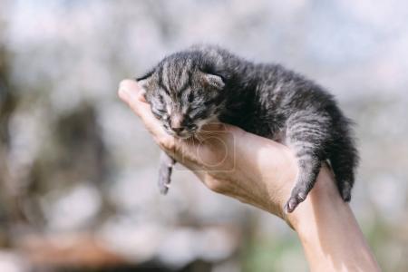 Newborn kitten in hands outdors