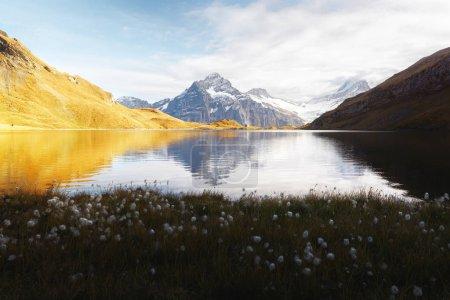 Photo pour Vue pittoresque sur le lac de Bachalpsee dans les Alpes suisses. Des fleurs blanches fleurissent au premier plan. Vallée de Grindelwald, Suisse. Photographie paysagère - image libre de droit