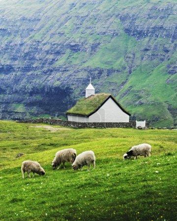 Photo pour Vue d'été de l'église traditionnelle Saksunar Kirkja sur gazon dans le village de Saksun. Paysage de beauté avec moutons et hautes montagnes. Streymoy île, Îles Féroé, Danemark . - image libre de droit