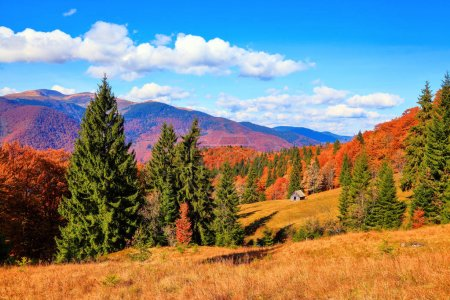 Photo pour Sur la pelouse d'herbe jaune, il y a des arbres verts luxuriants avec le fond des montagnes d'automne et des forêts dans la matinée ensoleillée . - image libre de droit