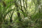 Green tropical jungle