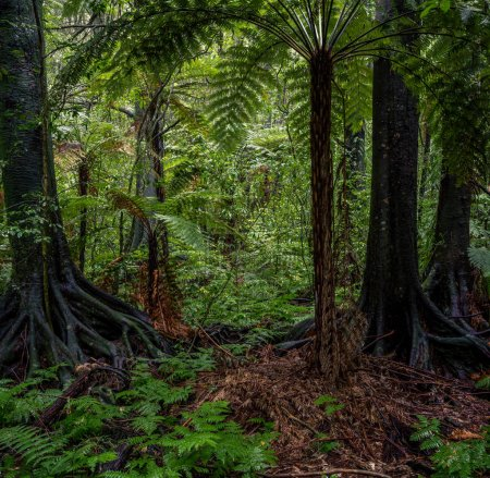 Jungle trees and ferns