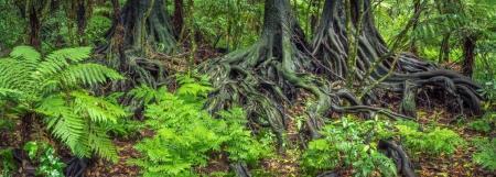 Jungle tree roots