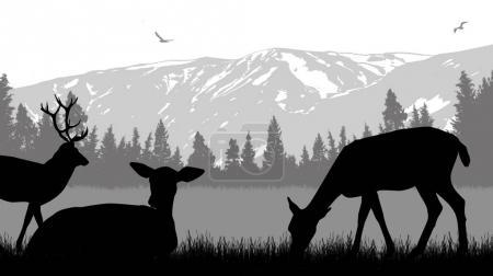 Deers on wild nature landscape