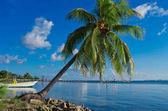 Palm on Caribbean coast.