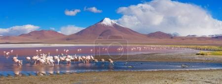 Flamingos in Laguna Colorada