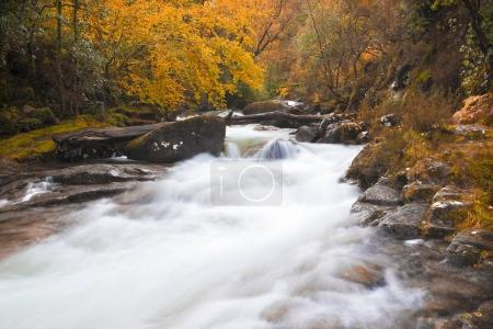 Beautiful Autumn landscape with trees and river