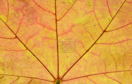close up of autumn leaf  on background