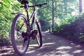 Female mountain bike in a forest