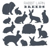 Rabbit lapin breed icon set Flat design
