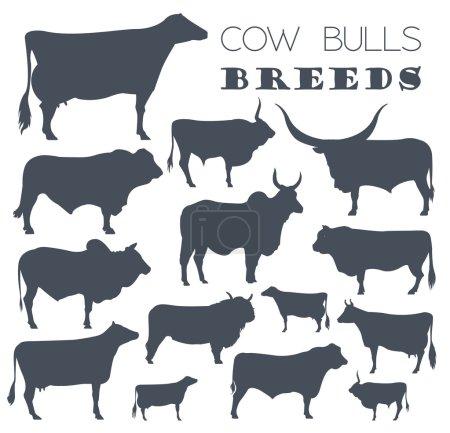 Cattle breeding. Cow, bulls breed icon set. Flat design