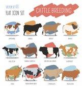 Cattle breeding Cow bulls breed icon set Flat design