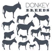 Donkey breeds icon set Animal farming Flat design