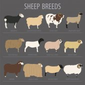Sheep breed icon set Farm animal Flat design