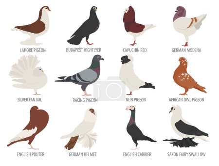 Poultry farming. Pigeon breeds icon set. Flat desi...