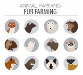 Fur farming Flat design