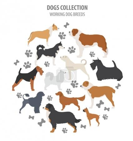 Working (watching) dog breeds collection isolated on white. Flat