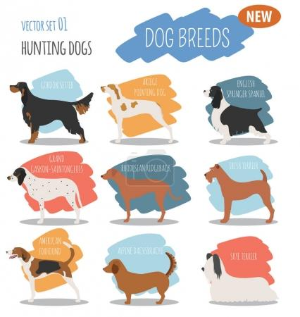 Hunting dog breeds set icon isolated on white . Flat style