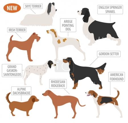 Hunting dog breeds set icon isolated on white . Fl...