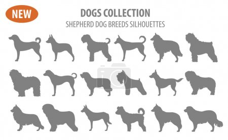 Shepherd dog breeds, sheepdogs set icon isolated on white . Flat