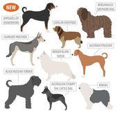 Shepherd dog breeds sheepdogs set icon isolated on white  Flat