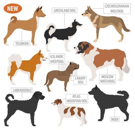 Working, watching dog breeds,  set icon isolated on white . Flat