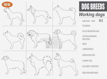 Working, watching dog breeds,  set icon isolated on white .Outli