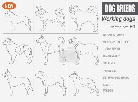 Working, watching dog breeds,  set icon isolated on white .Outli