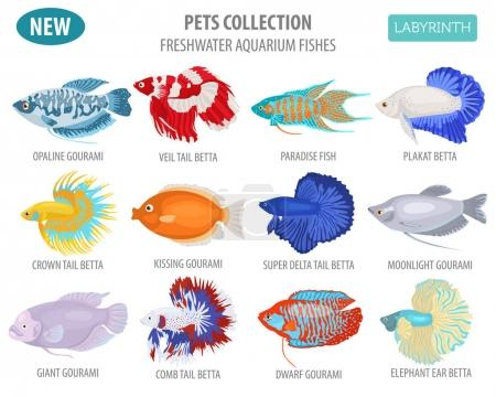 Freshwater aquarium fishes breeds icon set flat style isolated o