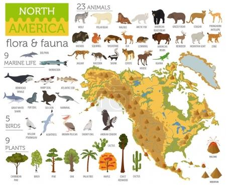 Illustration for North America flora and fauna map, flat elements. Animals, birds and sea life big set. Build your geography infographics collection. Vector illustration - Royalty Free Image