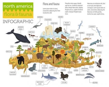 Photo pour Isometric 3d North America flora and fauna map elements. Animaux, oiseaux et vie marine. Créez votre propre collection d'infographies géographiques. Illustration vectorielle - image libre de droit