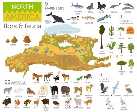 Illustration for Isometric 3d North America flora and fauna map elements. Animals, birds and sea life. Build your own geography infographics collection. Vector illustration - Royalty Free Image