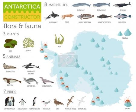 Illustration for Antarctic, Antarctica,  flora and fauna map, flat elements. Animals, birds and sea life big set. Build your geography infographics collection. Vector illustration - Royalty Free Image