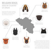 Dogs by country of origin Belgium dog breeds Infographic templ