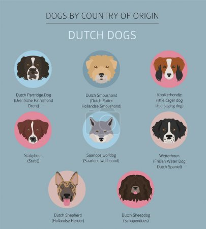 Dogs by country of origin. Dutch (Holland) dog breeds. Infograph