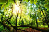 Green forest with bright beautiful sun beams