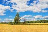 Beautiful summer rural landscape