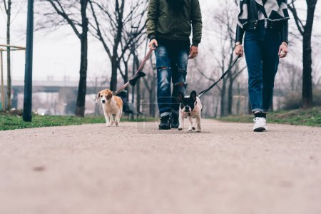 Photo for Low section of young couple walking outdoor with dogs on a leash smiling - friendship, everyday life, happiness concept - Royalty Free Image