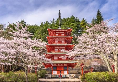 Pagoda and Cherry Blossoms