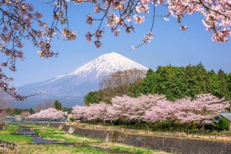 Mt. Fuji in Spring