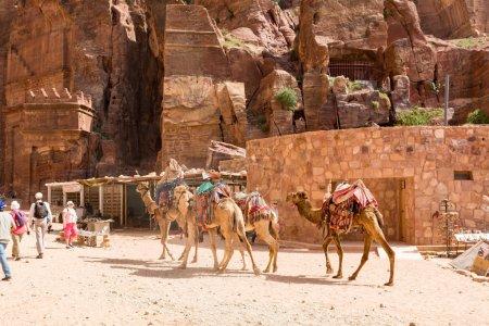 Photo pour PETRA, JORDANIE - 25 AVRIL 2016 : Un Bédouin arabe jordanien chevauche un chameau à Petra Petra était à l'origine la capitale des Nabatéens, une ancienne civilisation arabe . - image libre de droit