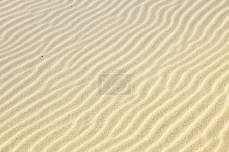 Sand ripples in Poland