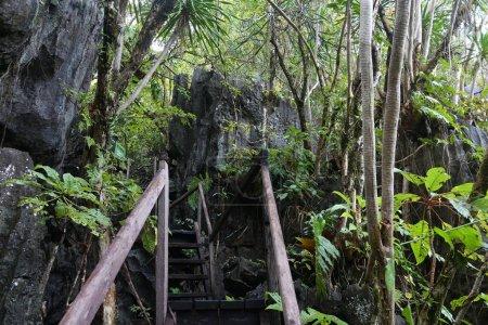 Palawan jungle trail