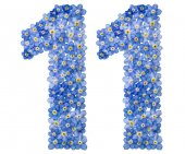 Arabic numeral 11, eleven, from blue forget-me-not flowers