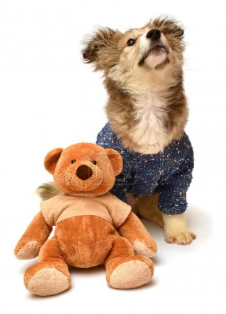 puppy in sweater and teddy bear